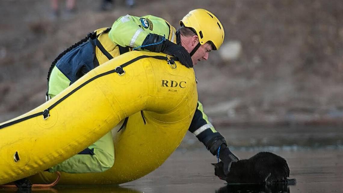 River Dog Rescue